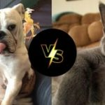 Σκύλος ή γάτα;