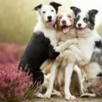 Ποια είναι η αγαπημένη σου ράτσα σκύλου;