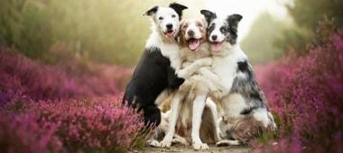 σκύλοι αγκαλιάζονται,διάλεξε την αγαπημένη σου ράτσα σκύλου