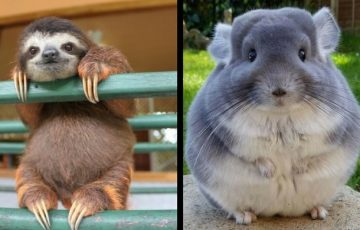 Ποιο άγριο ζώο είναι το πιο χαριτωμένο;