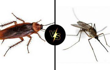 κουνούπι ή κατσαρίδα; ποια θα εξαφάνιζες αν μπορούσες;
